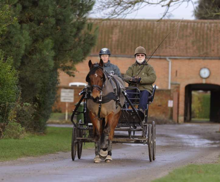 The Magpie Centre at Wallington Hall, new carriage Horse Teddy and new carriage, with Teddy are Anne Sim and Rob James ANL-161201-153320009