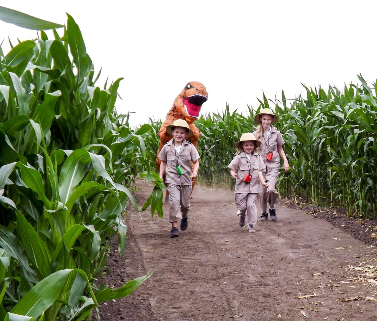 On the look out for dinosaurs in the Skylark maize maze: Annabell Wesley, 11, Owen Askew, 7 and Amelia Hathaway, 6. (3047081)