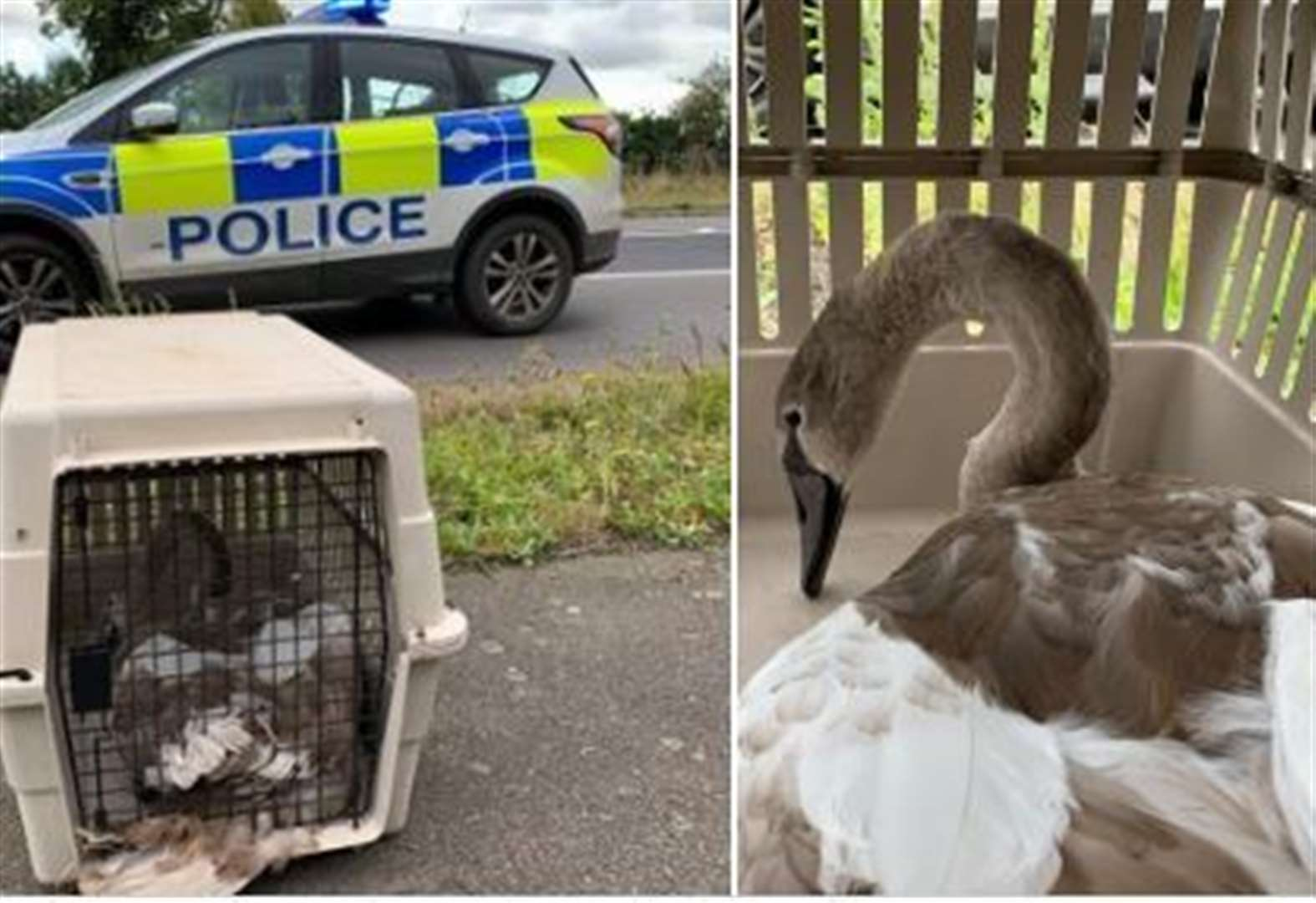 Hot Fuzz style capture of swan