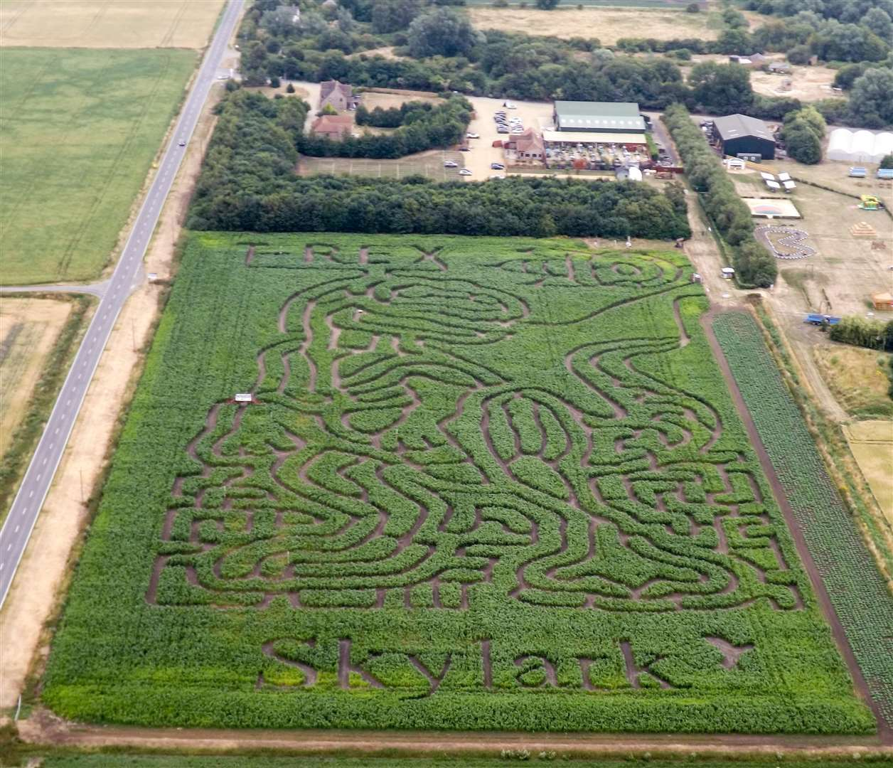 The view of the new T-Rex shaped maize maze at Skylark captured from a helicopter. (3047043)