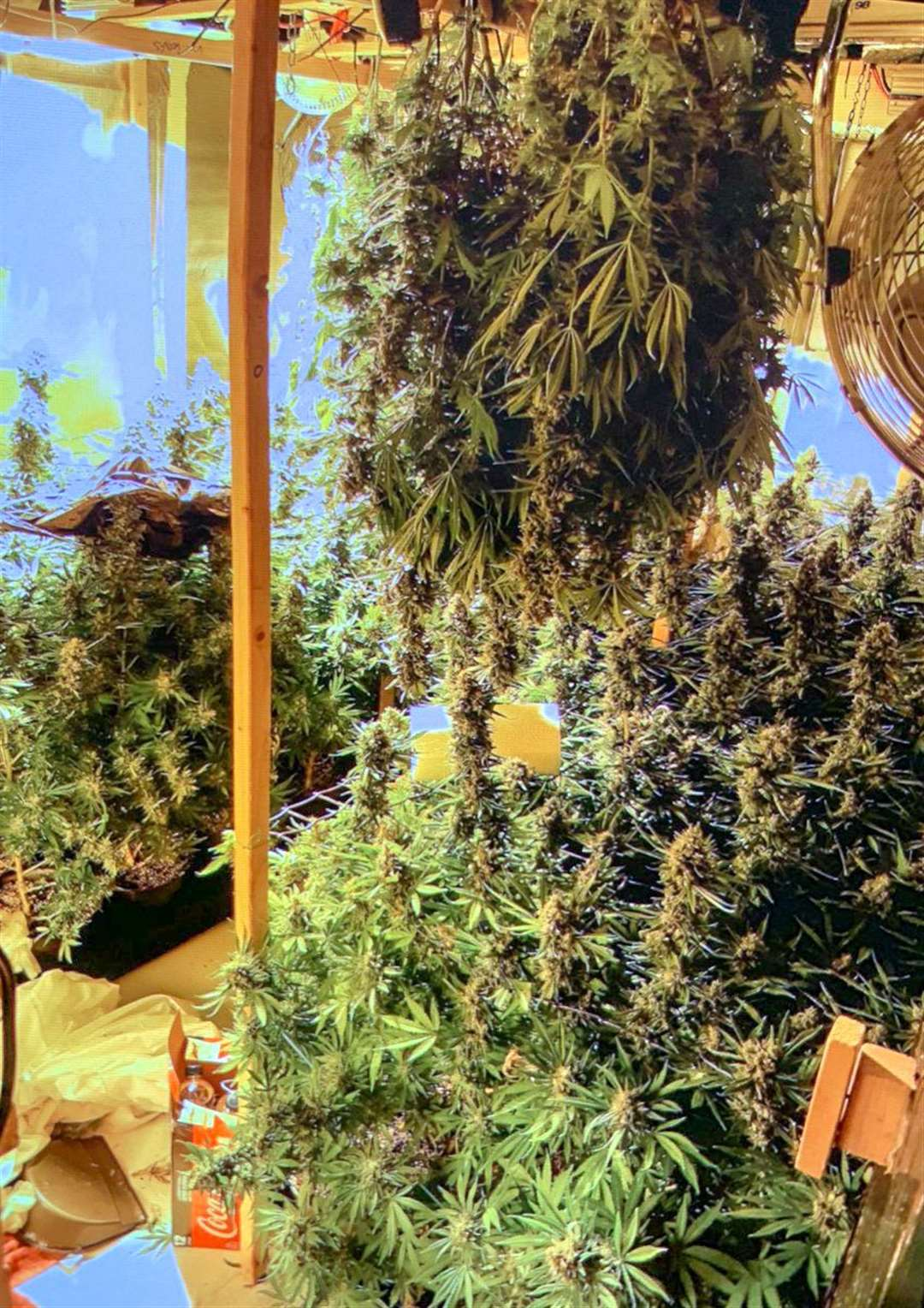 Cannabis factory discovered in secret bedroom. (7657776)