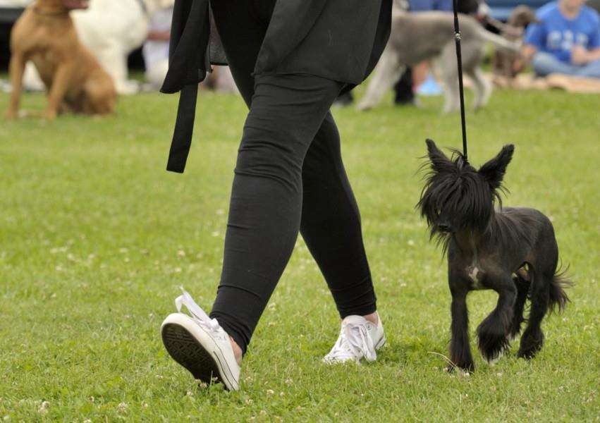 Wisbech retired greyhound trust dog show'Sue Higgs with Lexi ANL-150719-162414009