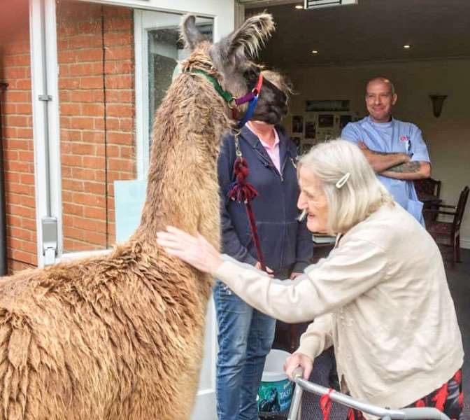 Llamas paid a visit to Lyncroft care home in Wisbech.