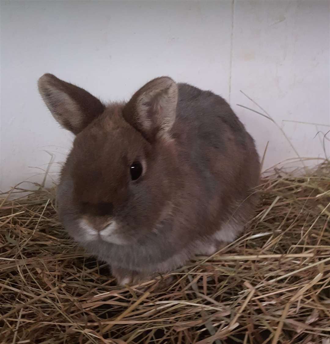 Three rabbits were found dumped outside a flat in Wisbech. (31630289)
