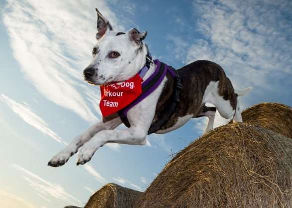 Parkour for Pooches in Cambridgeshire