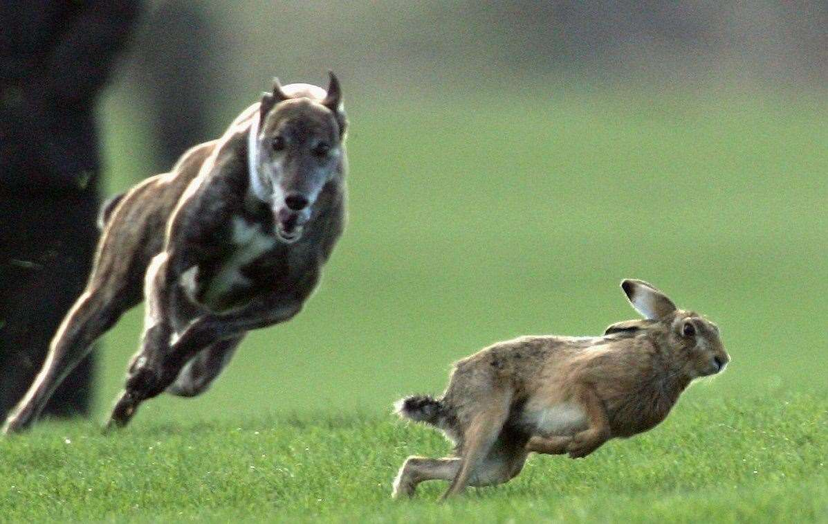 Hare coursing is an illegal blood sport and police are urging to report any signs of it taking place.