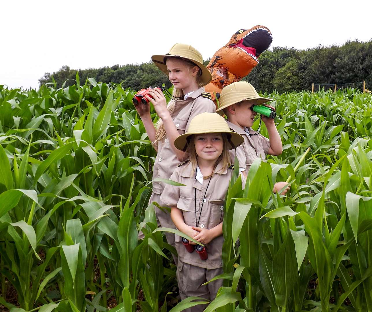 On the look out for dinosaurs in the Skylark maize maze: Annabell Wesley, 11, Owen Askew, 7 and Amelia Hathaway, 6. (3047085)