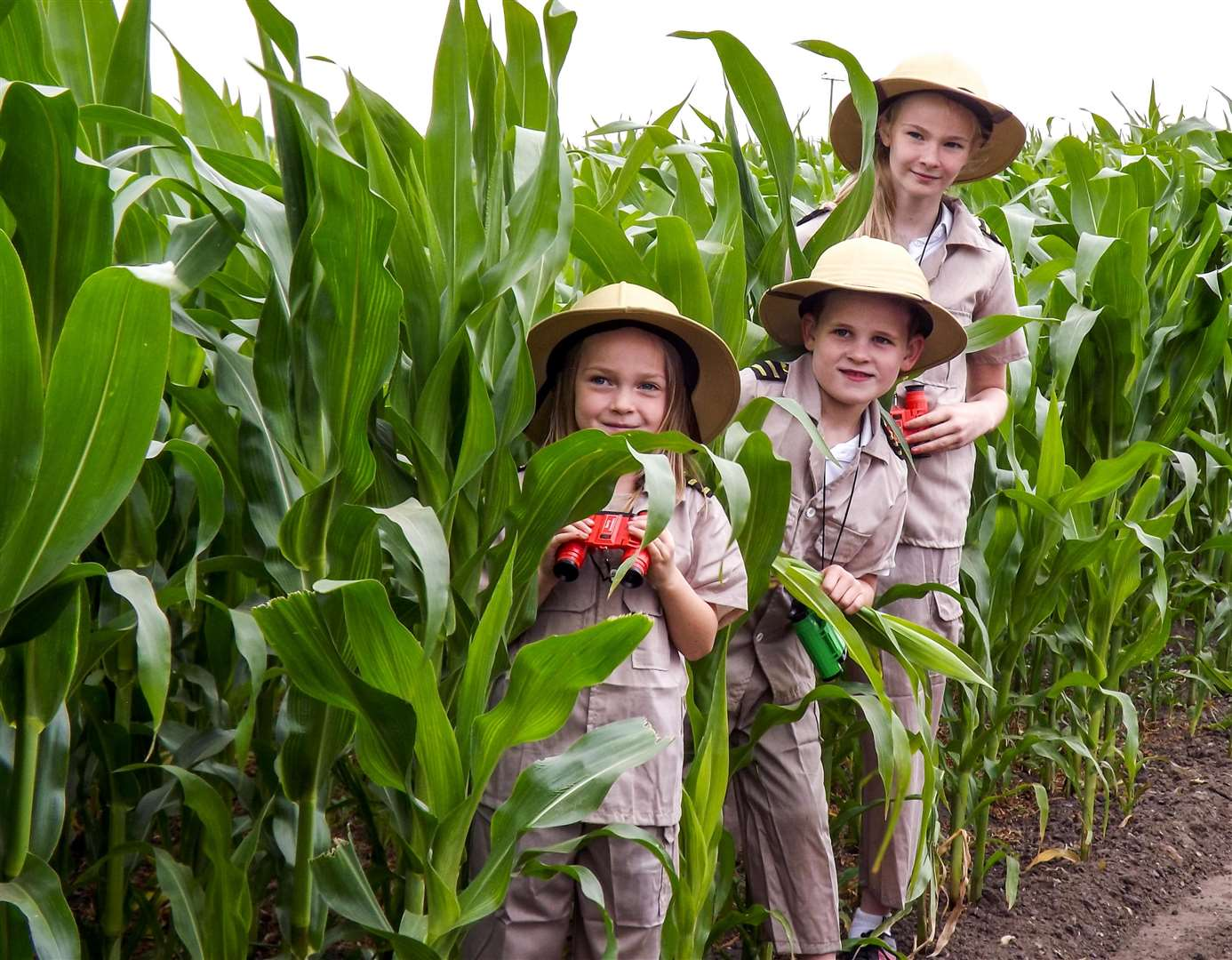 On the look out for dinosaurs in the Skylark maize maze: Annabell Wesley, 11, Owen Askew, 7 and Amelia Hathaway, 6. (3047063)