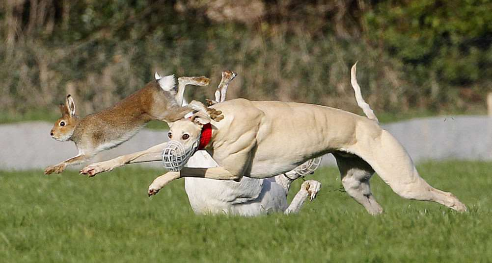 Six have been detained in Downham for hare coursing CREDIT: PA WIRE