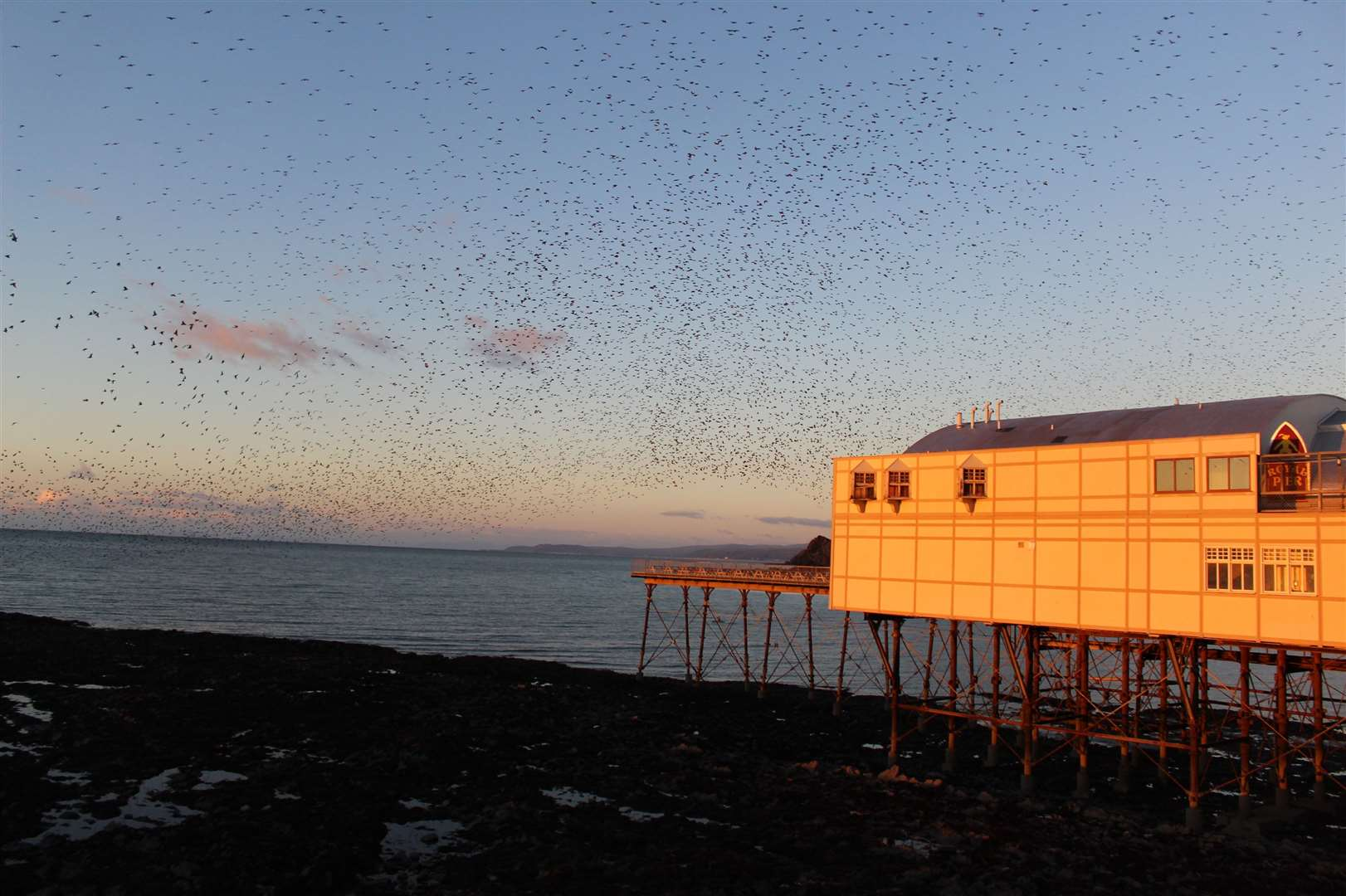 A starling murmuration. Photo by Hannah Clarke (43706520)