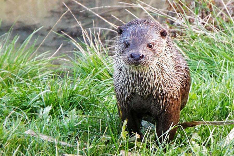 This picture of an otter helped Jeff Packham win the Littlehampton and District Camera Club beginners trophy SUS-160202-131313001