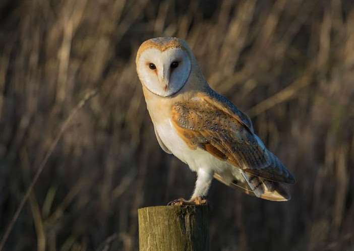 Simon Stirrup won last year's competition after photographing a barn owl near Welney