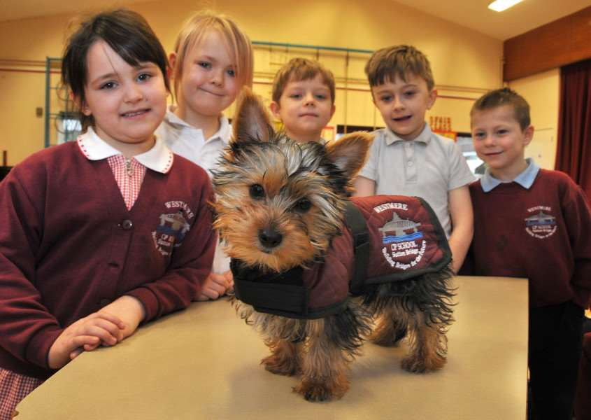 Edison the Yorkshire Terrier with 'Tyla Walker, Elicia Neve, Aiden Langford, Preston Warner and Logan Hood at Sutton Bridge Westmere Community Primary School. Photo by Tim Wilson.