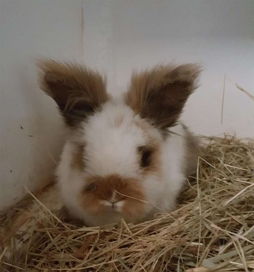 Three rabbits were found dumped outside a flat in Wisbech. (31630285)