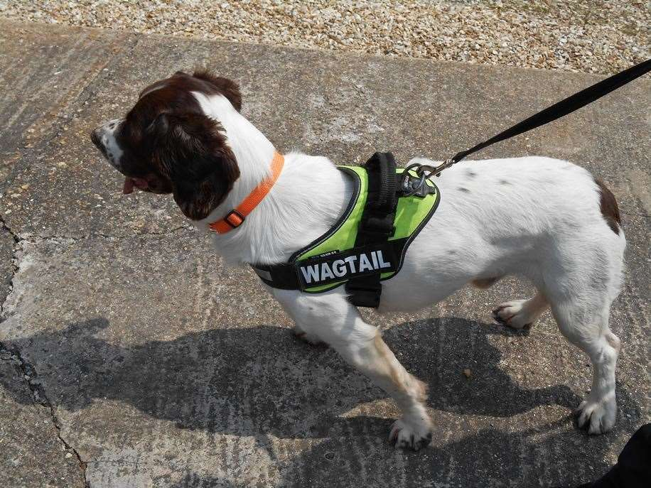 Sniffer dogs from Wagtail International helped with the raids on four premises in Wisbech. Photo: Iliffe archive.