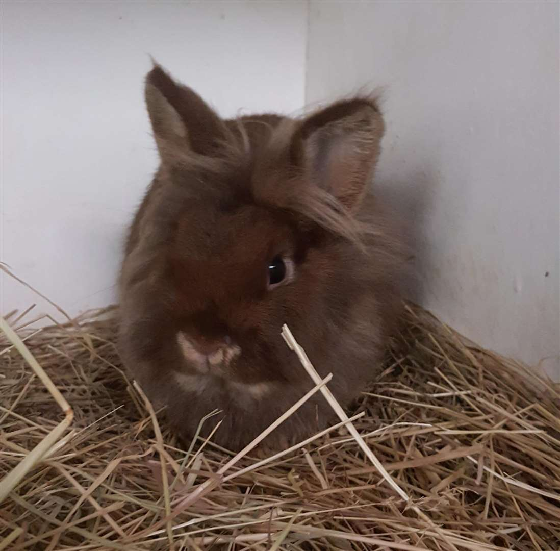 Three rabbits were found dumped outside a flat in Wisbech. (31630292)