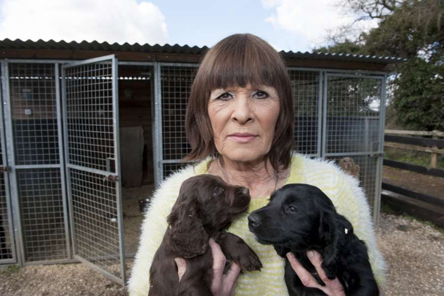 Gail Clarke of Cherry tree farm Gayton with remaining puppies after seven of the nine were stolen. ANL-160330-133630009