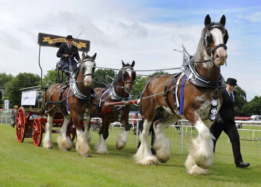The Royal Norfolk Show Norwich Wednesday June 29th 2016'Heavy Horse Turnouts ANL-160629-184456009