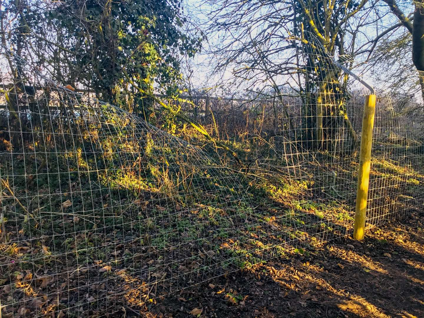 Manea otter fence has been repeatedly vandalised. (6909304)
