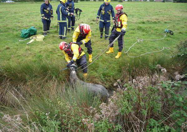 Fire crews rescued this foal from a water filled ditch